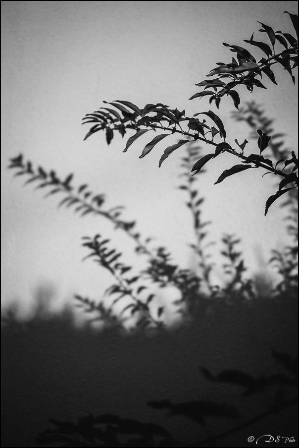 Feuilles d'ombre et de lumière 20151209143342-1d4dfce6