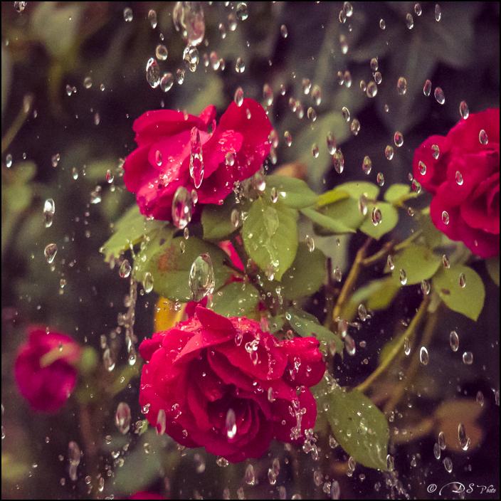 Il pleut au 16000ème 20161010092422-828bf162