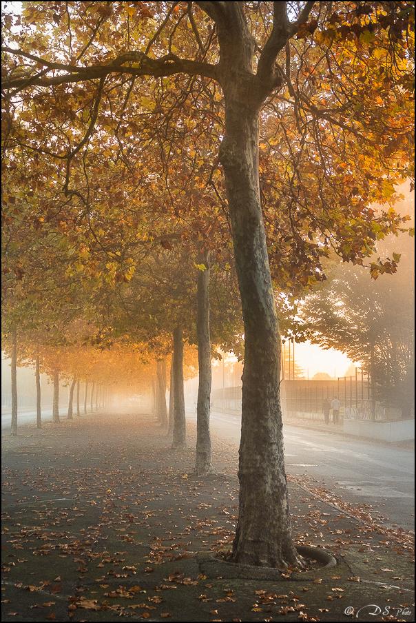 Brouillard... urbain 20161104100839-83a5c44a