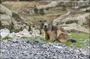Béarn : Artouste et son petit train à flanc de montagne