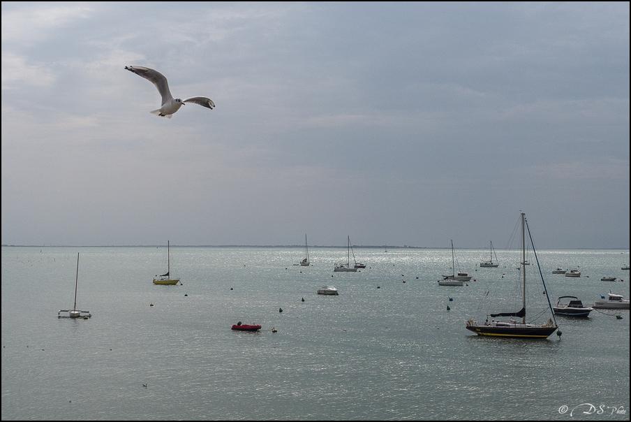 [SERIE] Flâneries photographiques : sur la côte Charentaise [+Ajouts] 20171030212223-d66e7ffd