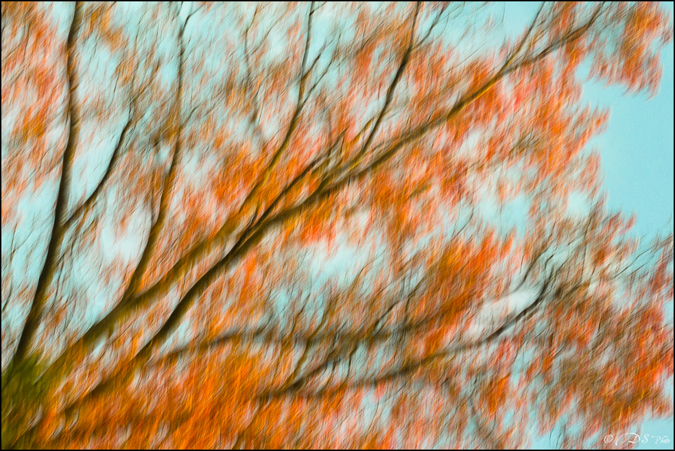 Les brises d'automne... 20171113112520-a4f43969