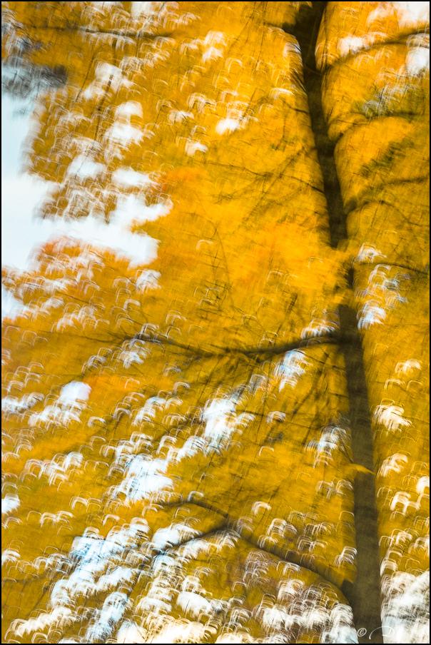 Les brises d'automne... 20171113112525-30c270de