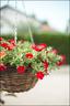 Le bokeh du bouquet